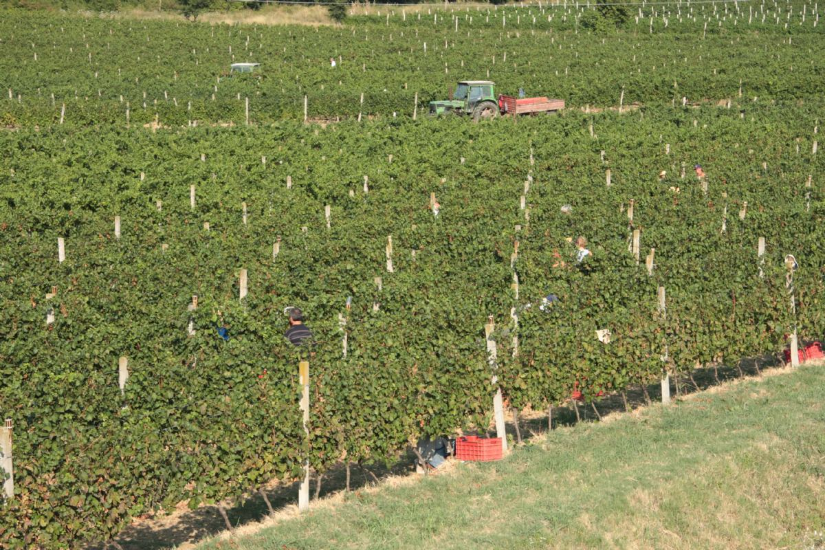 25 years of wine growing in 				Pavlomir
